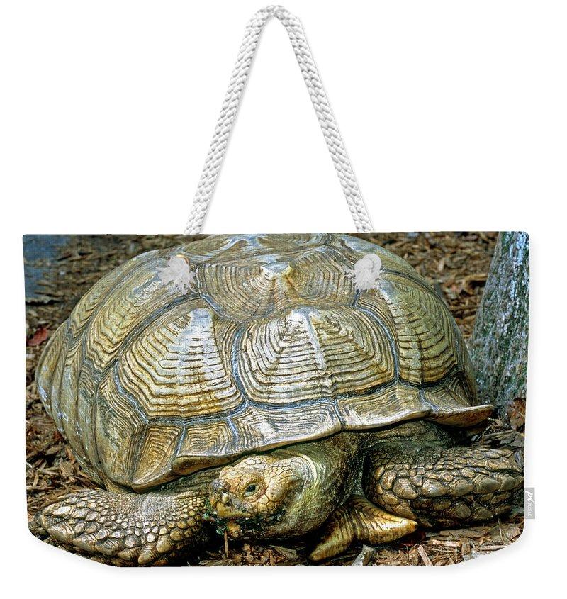 African Spurred Tortoise Weekender Tote Bag featuring the photograph African Spurred Tortoise by Millard H. Sharp