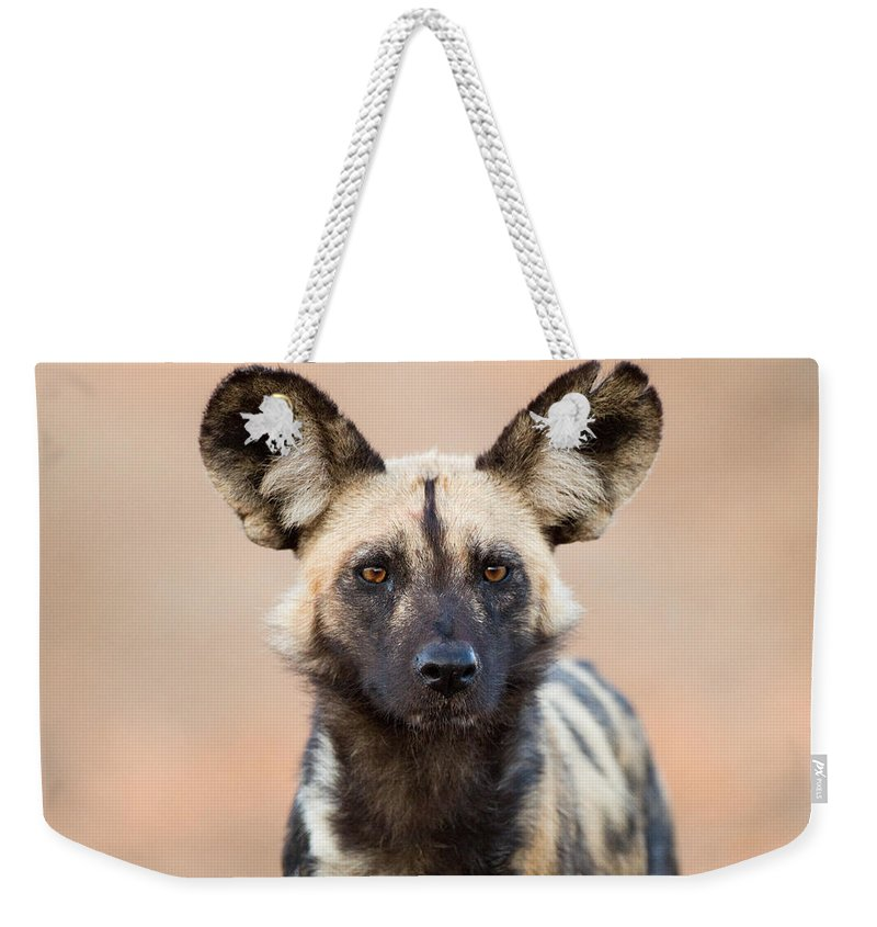 African Wild Dog Weekender Tote Bag featuring the photograph African Wild Dog by Max Waugh