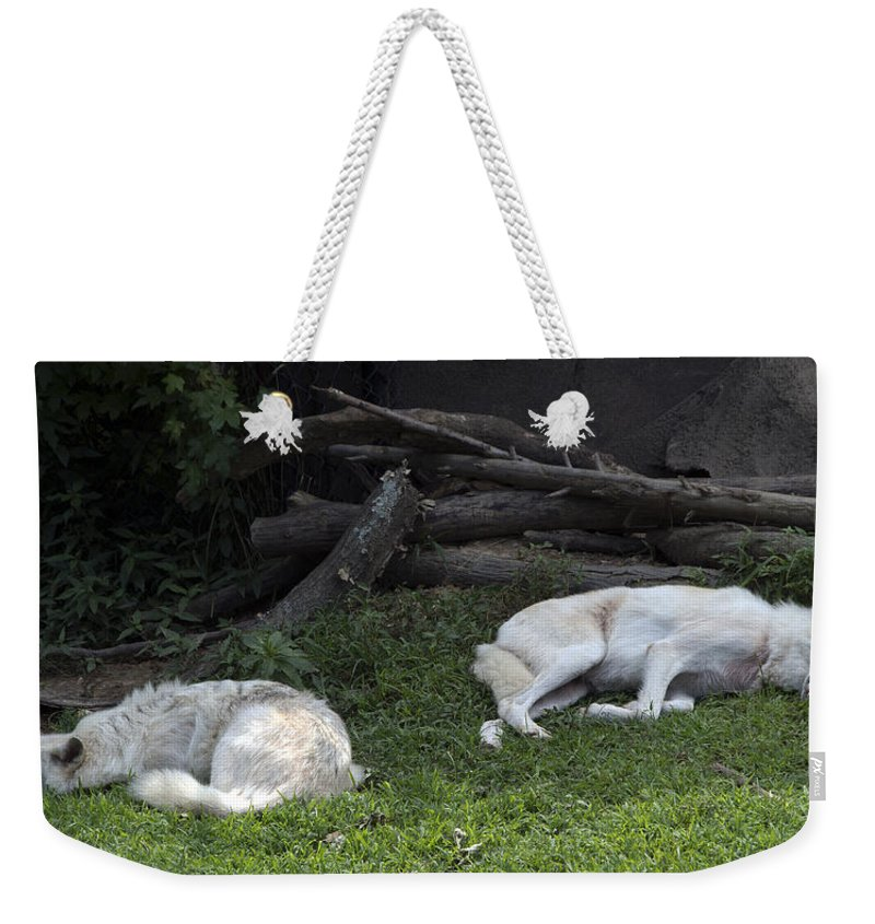 Wolf Weekender Tote Bag featuring the photograph After A Long Night by John Dauer