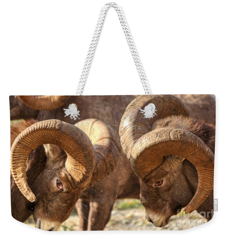 Bighorn Ram Weekender Tote Bag featuring the photograph After Impact by James Anderson