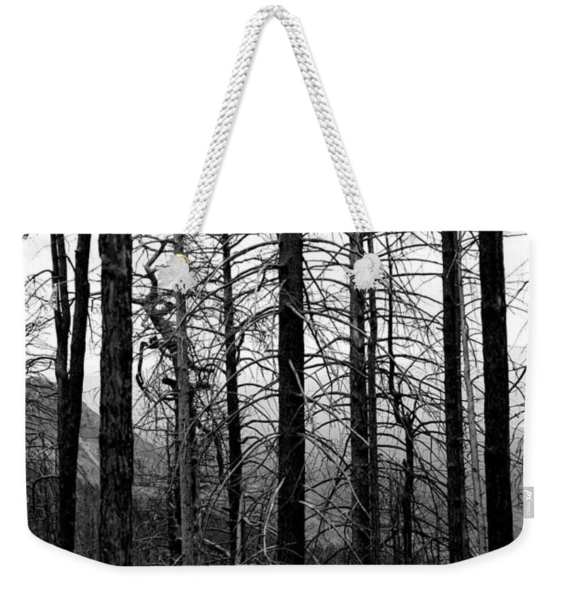 Trees Weekender Tote Bag featuring the photograph After The Fire by Joe Kozlowski