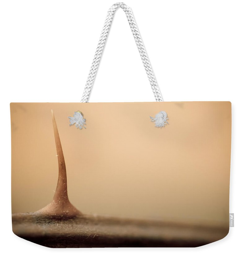 Thorn Weekender Tote Bag featuring the photograph After The Flesh by Shane Holsclaw