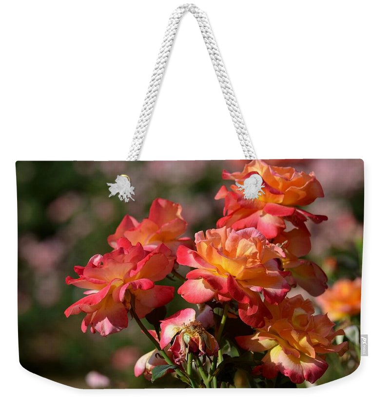 Afternoon Roses Weekender Tote Bag featuring the photograph Afternoon Roses by Maria Urso