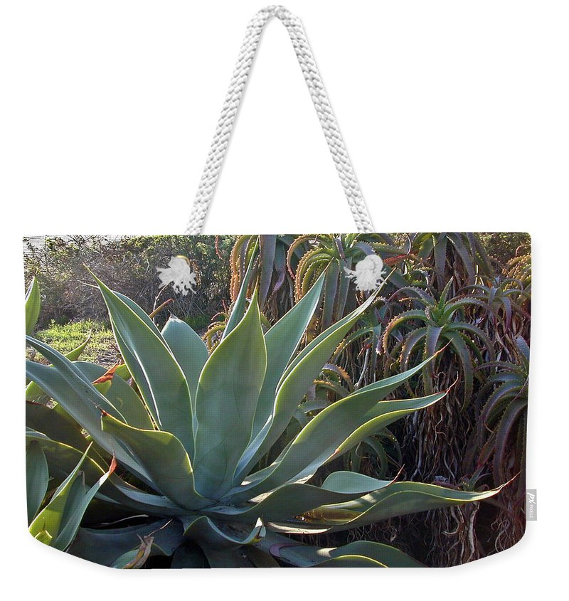 Agave Weekender Tote Bag featuring the photograph Agave At Sunset by Douglas Barnett