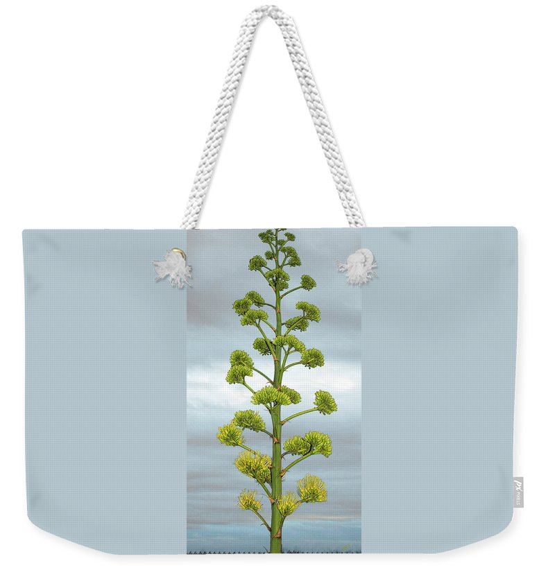 Agave Bloom Weekender Tote Bag featuring the photograph Agave Flower Spike by Ben and Raisa Gertsberg
