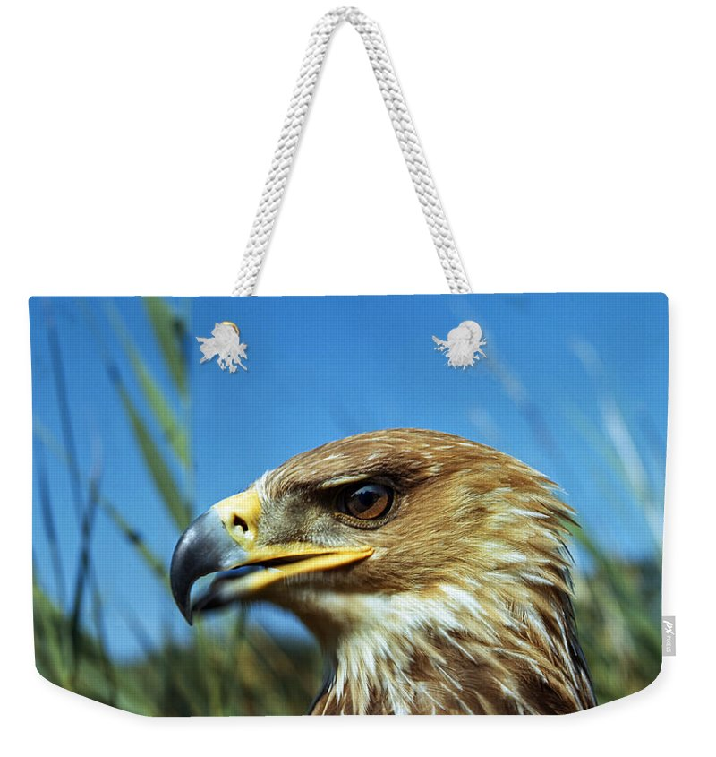 Accipitridae Weekender Tote Bag featuring the photograph Aigle Imperial Aquila Heliaca by Gerard Lacz