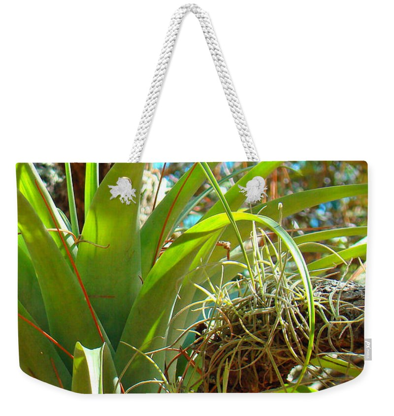 Air Plants Weekender Tote Bag featuring the photograph Air Plants 1 by Nancy L Marshall