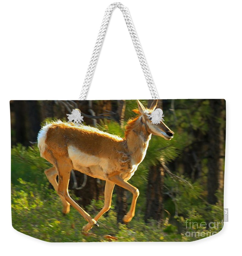 Pronghorn Weekender Tote Bag featuring the photograph Airborn Pronghorn by Adam Jewell
