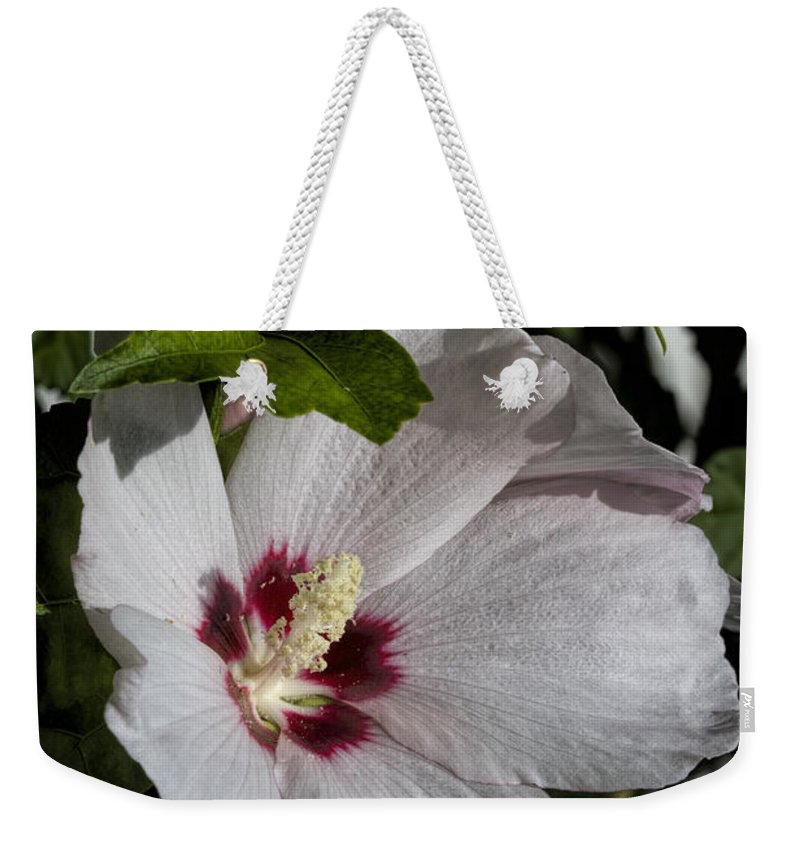 Mallow Weekender Tote Bag featuring the photograph Alabama Wildflower - Woolly Rose Mallow by Kathy Clark