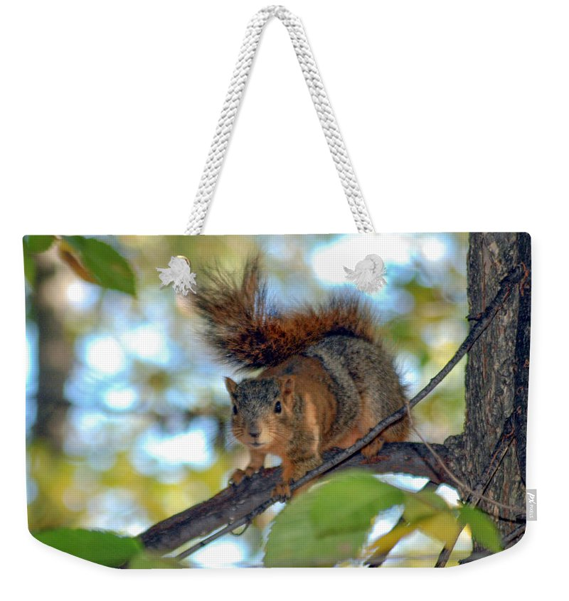 Squirrel Weekender Tote Bag featuring the photograph Alarmed by Optical Playground By MP Ray