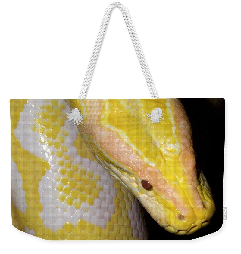 Burmese Python Weekender Tote Bags