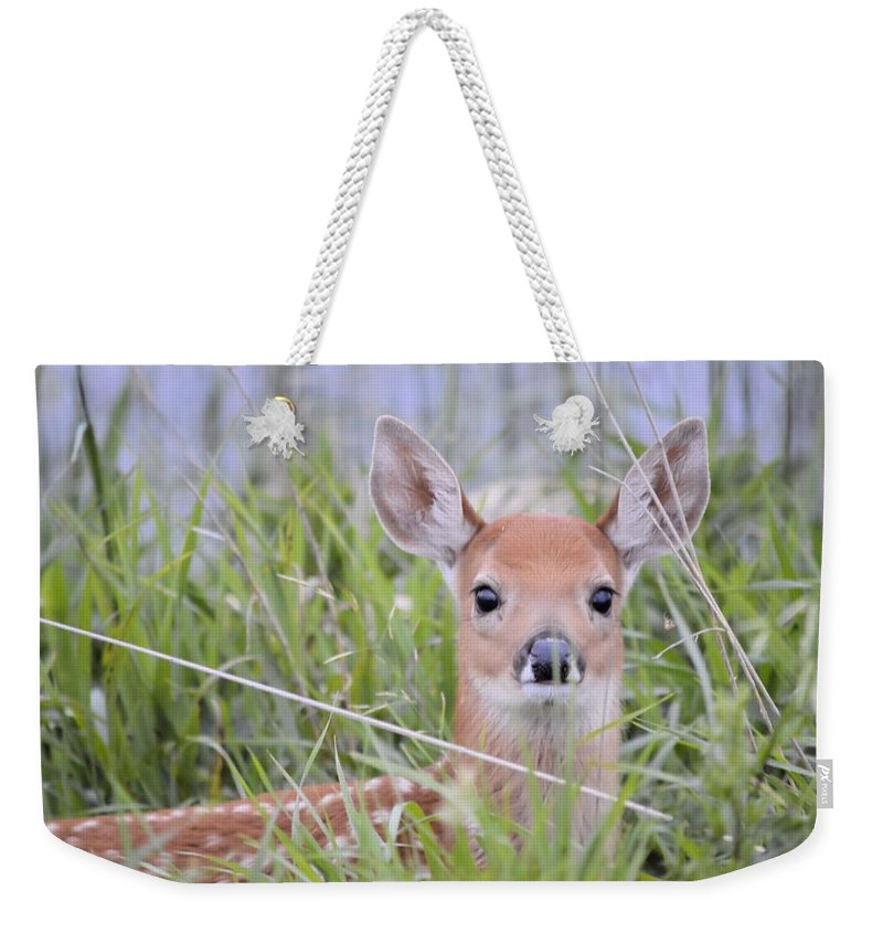 Deer Weekender Tote Bag featuring the photograph Alert by Bonfire Photography