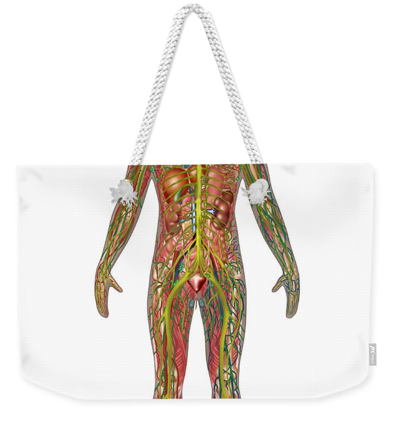 Science Weekender Tote Bag featuring the photograph All Body Systems In Male Anatomy by Gwen Shockey