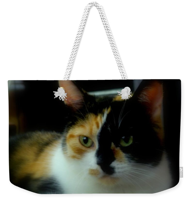 House Cat Weekender Tote Bag featuring the photograph All I Ask Of You by Lingfai Leung
