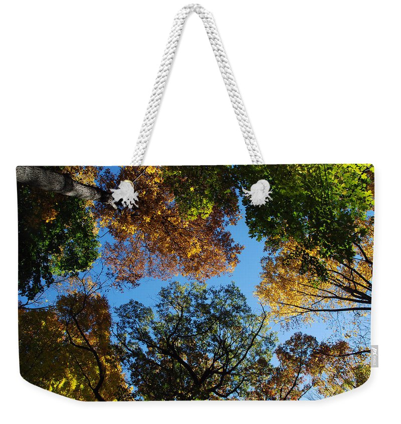 Tree Weekender Tote Bag featuring the photograph All The Trees Of The Forest by Richard Bryce and Family