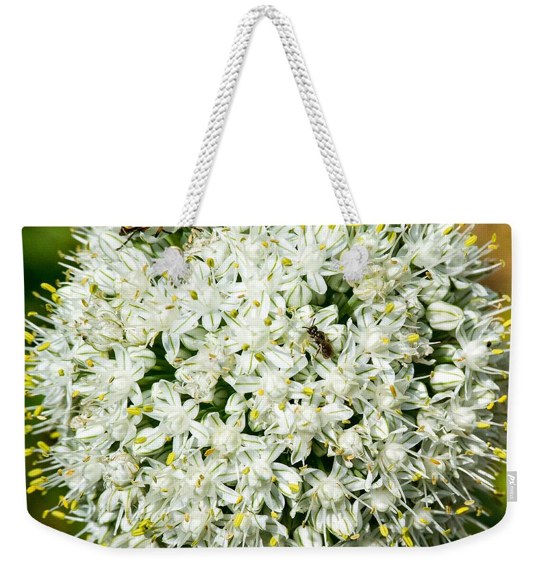 Plant Weekender Tote Bag featuring the photograph Allium Flower And Lightning Bug by Douglas Barnett