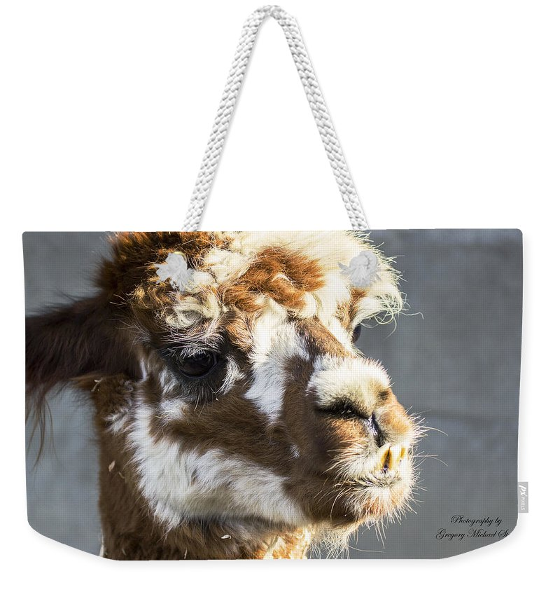 Alpaca Weekender Tote Bag featuring the photograph Alpaca by Safe Haven Photography Northwest