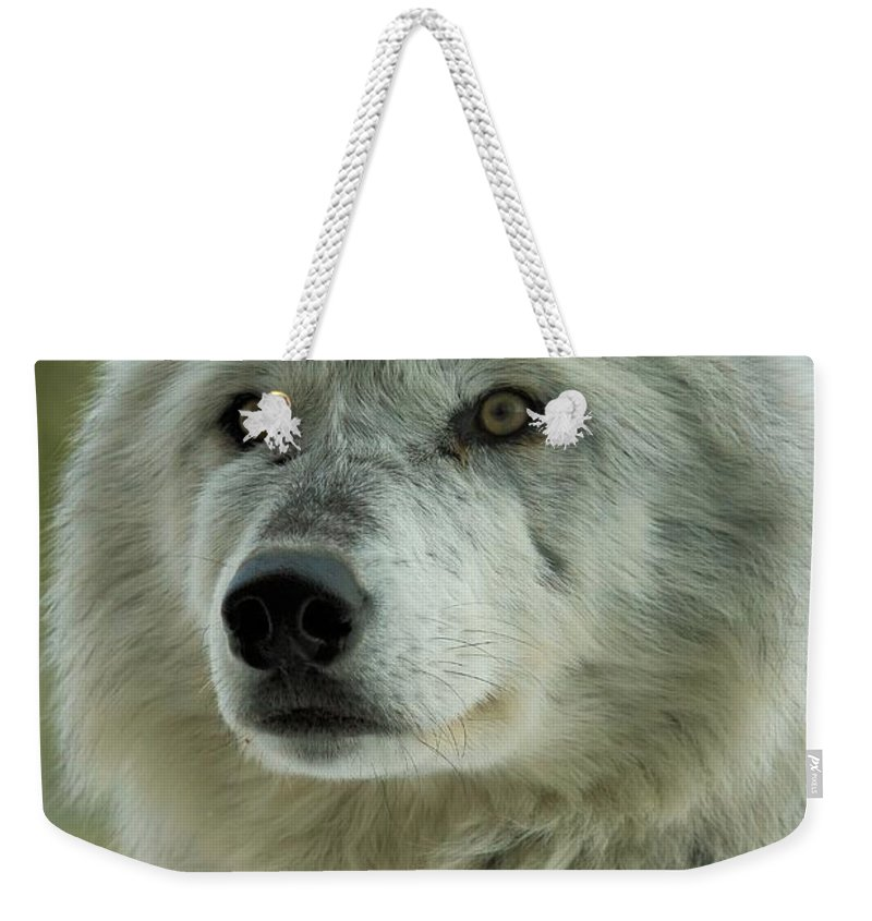 Alpha Wolf Weekender Tote Bag featuring the photograph Alpha Curiosity by Adam Jewell