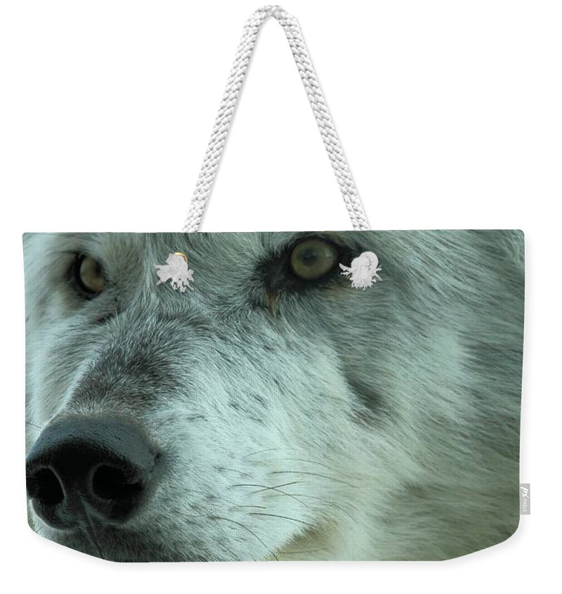 Alpha Wolf Weekender Tote Bag featuring the photograph Alpha Girl Closeup by Adam Jewell