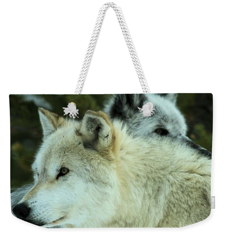Montana Wolves Weekender Tote Bag featuring the photograph Alpha In The Background by Adam Jewell