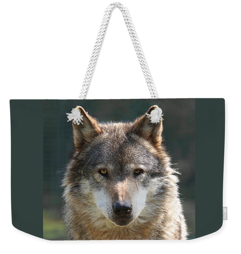 Grey Wolf Weekender Tote Bag featuring the photograph Alpha Male Wolf - I'm Watching You by Gill Billington