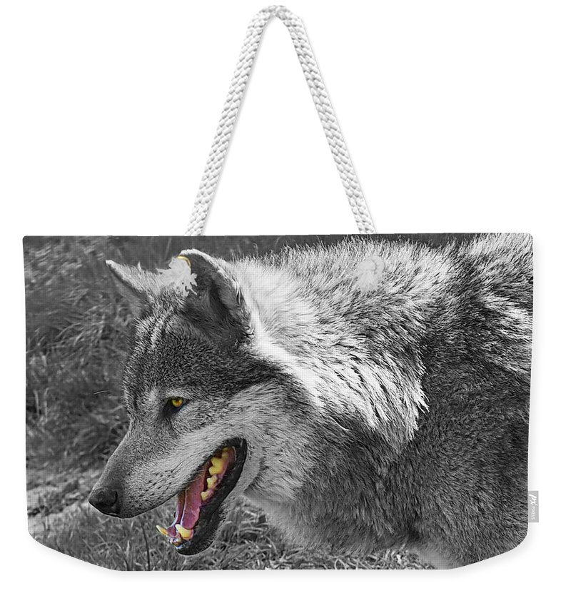 Grey Wolf Weekender Tote Bag featuring the photograph Alpha Male Wolf - You Look Tasty 2 by Gill Billington