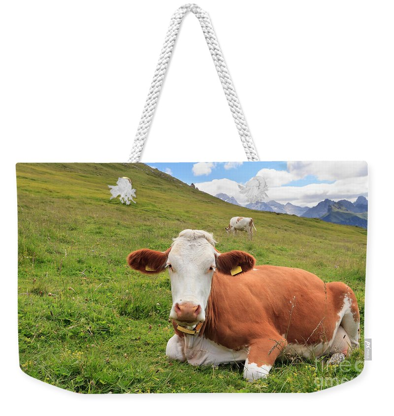 Agriculture Weekender Tote Bag featuring the photograph Alpine Pasture With Cow by Antonio Scarpi