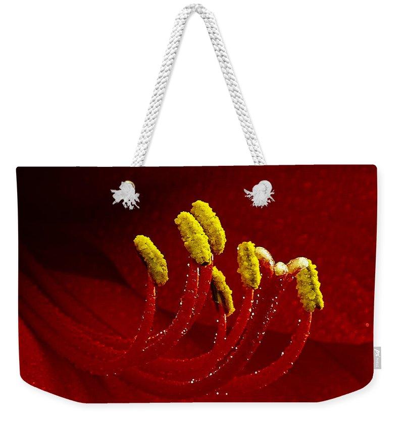 Amaryllis Weekender Tote Bag featuring the photograph Amaryllis 2 by Ingrid Smith-Johnsen