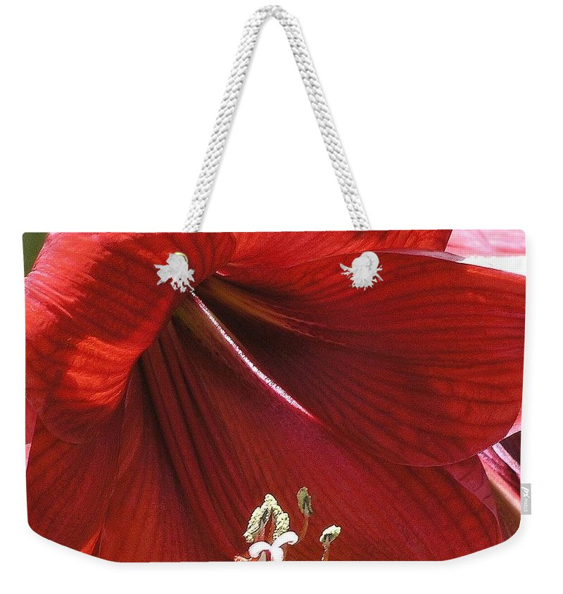 Amaryllis Weekender Tote Bag featuring the photograph Amaryllis by Mary Deal