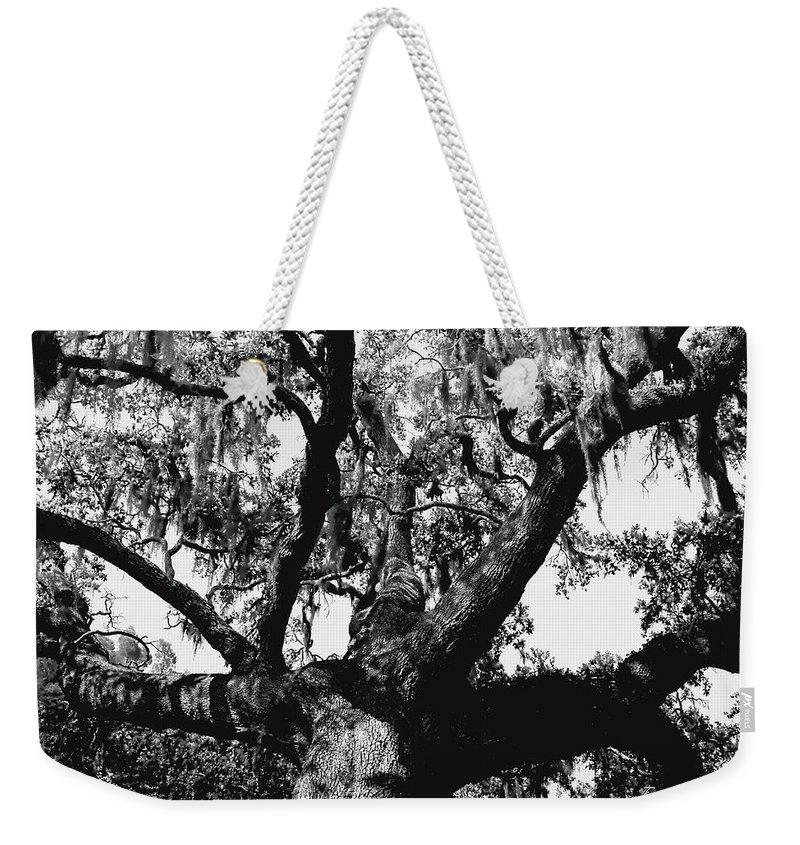 Oak Weekender Tote Bag featuring the photograph Amazing Oak Tree by Debra Forand
