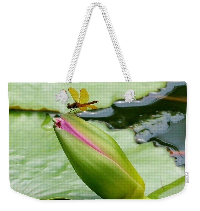 Ponds Weekender Tote Bag featuring the photograph Amber Dragonfly by Karen Silvestri