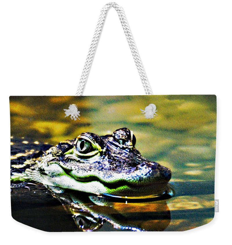 Rolling Hills Wildlife Adventure  Weekender Tote Bag featuring the photograph American Alligator 1 by Walter Herrit