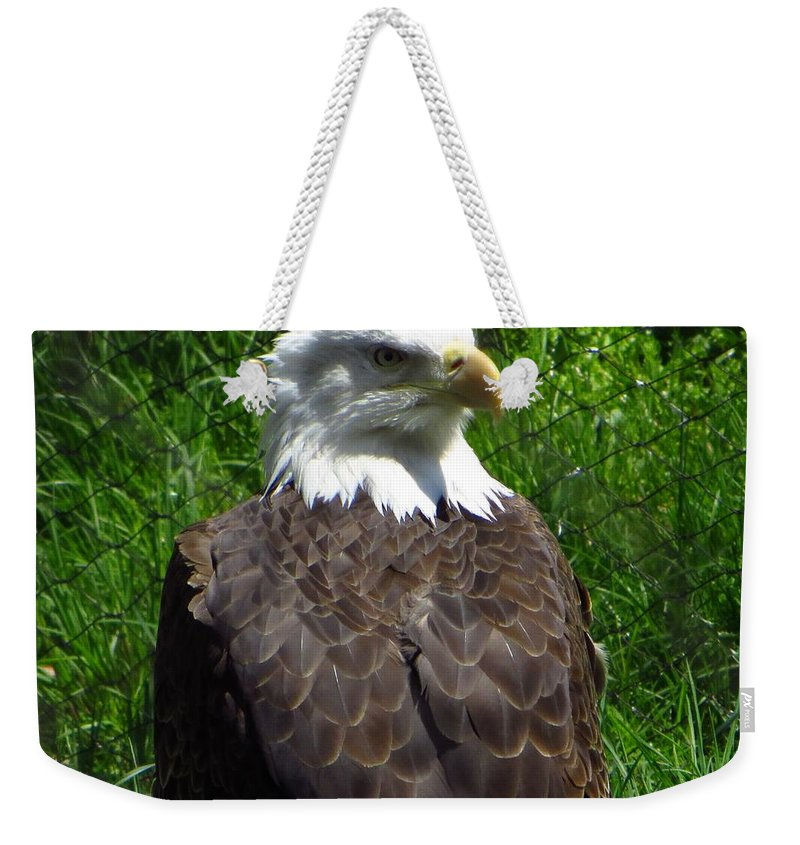 Us National Bird Weekender Tote Bag featuring the photograph American Bald Eagle by Sonali Gangane