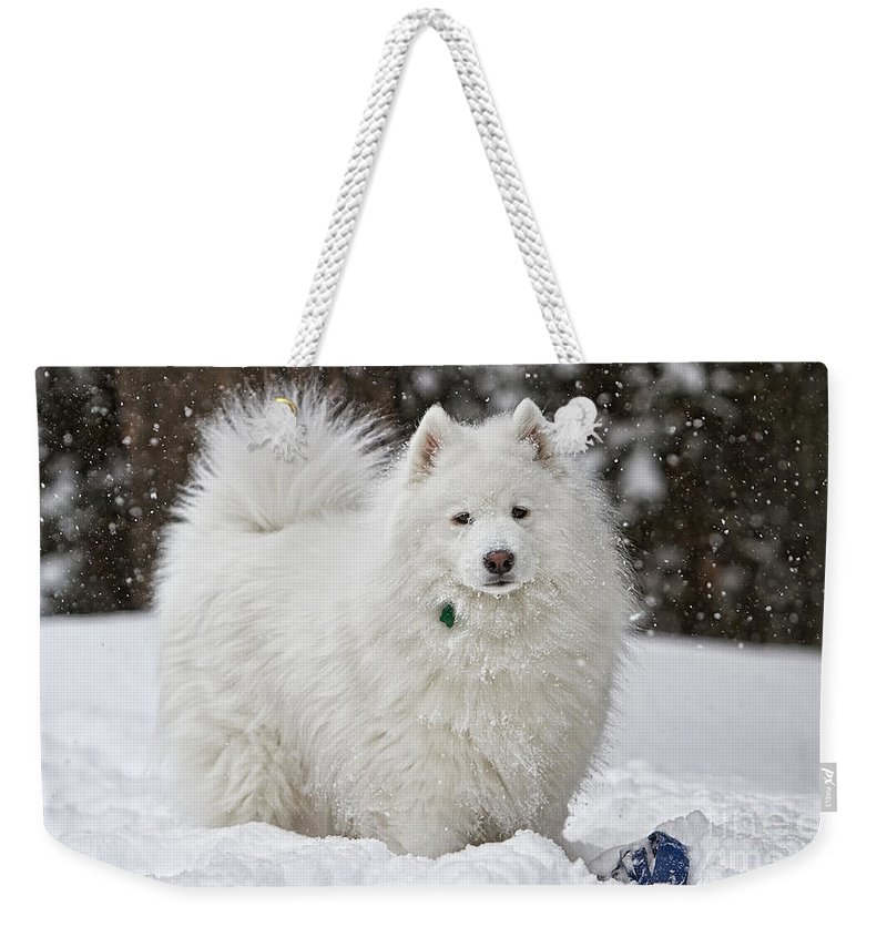 American Eskimo Dog Paintings Weekender Tote Bag featuring the mixed media American Eskimo Dog by Marvin Blaine