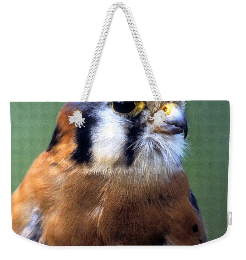 Kestrel Weekender Tote Bag featuring the photograph American Kestrel Male by Larry Allan