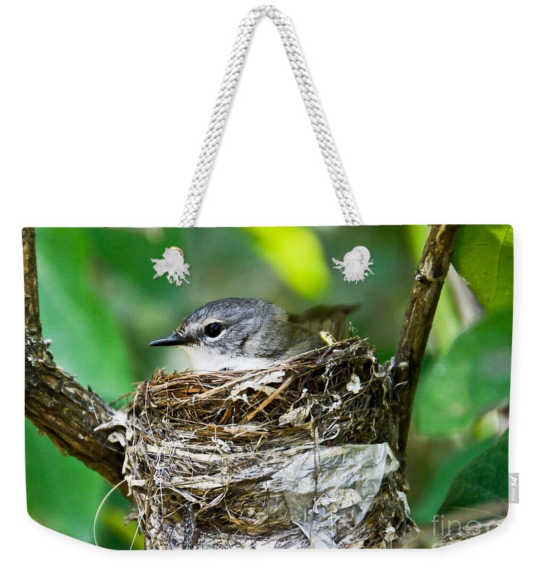 New Life Weekender Tote Bag featuring the photograph American Redstart Nest by Cheryl Baxter