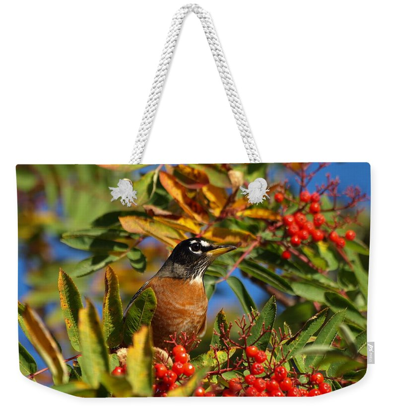 Peterson Nature Photography Weekender Tote Bag featuring the photograph American Robin by James Peterson