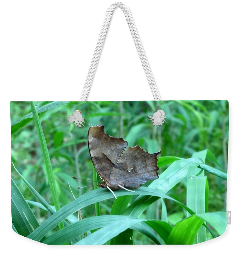 American Snout Butterfly Images Butterflies Of Maryland Images Butterfly Diversity American Snout Photograph Prints Forest Ecostystem Biodiversity Forest Butterfly Prints Leaf Winged Butterfly Nature Bowelys Quarters Maryland Butterfly Pictures Weekender Tote Bag featuring the photograph American Snout Butterfly by Joshua Bales