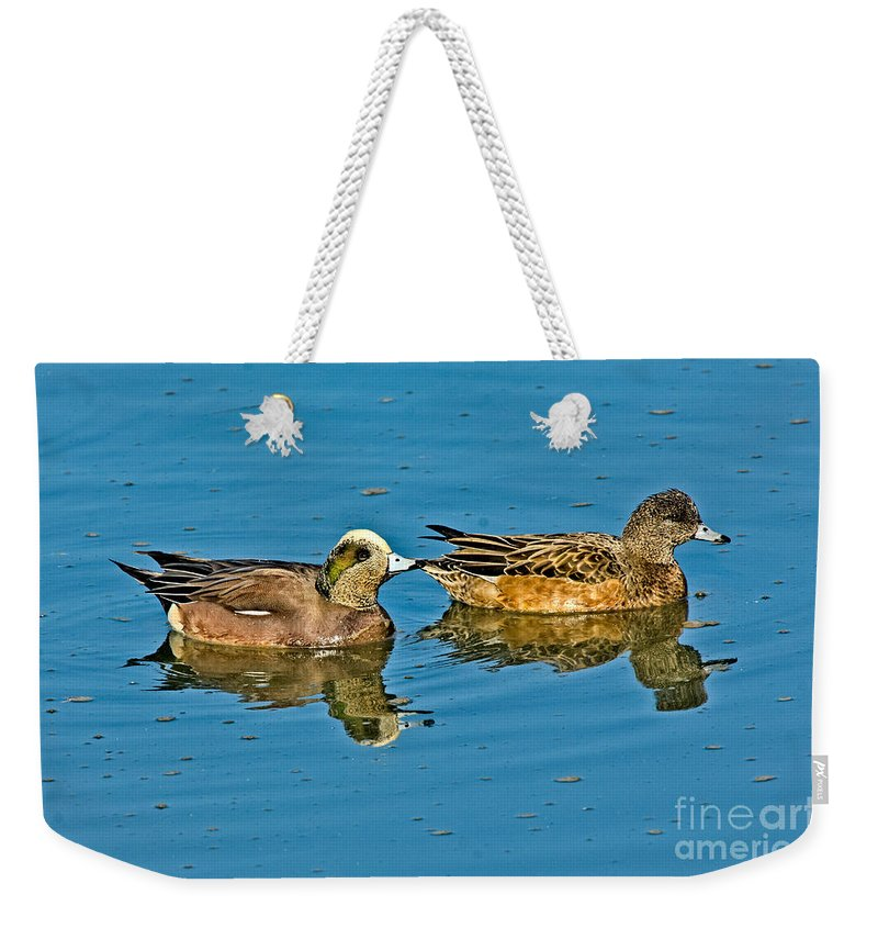 Fauna Weekender Tote Bag featuring the photograph American Wigeon Pair Swimming by Anthony Mercieca