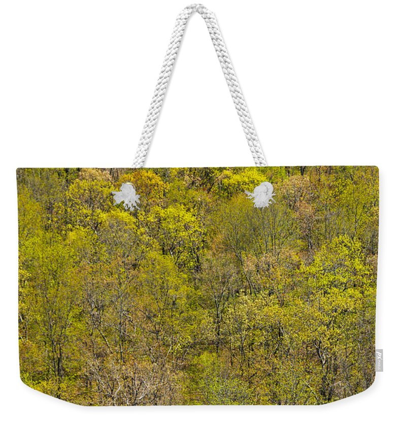 Trees Weekender Tote Bag featuring the photograph Among The Trees by Karol Livote
