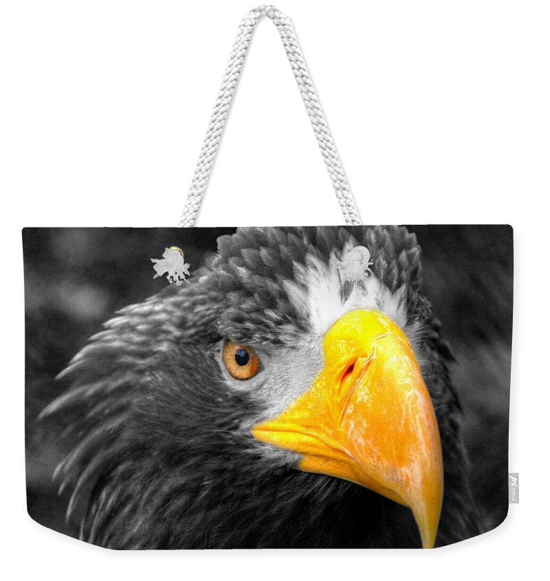 Golden Weekender Tote Bag featuring the photograph An American Eagle by Rob Hawkins