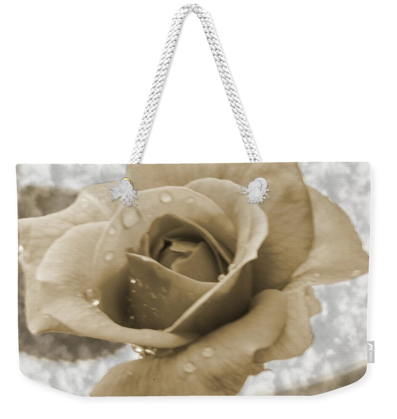 Rose Weekender Tote Bag featuring the photograph An Old Fashion Rose by Donna Brown