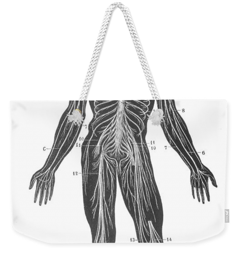 1890s Weekender Tote Bag featuring the photograph Anatomy: Nervous System by Granger