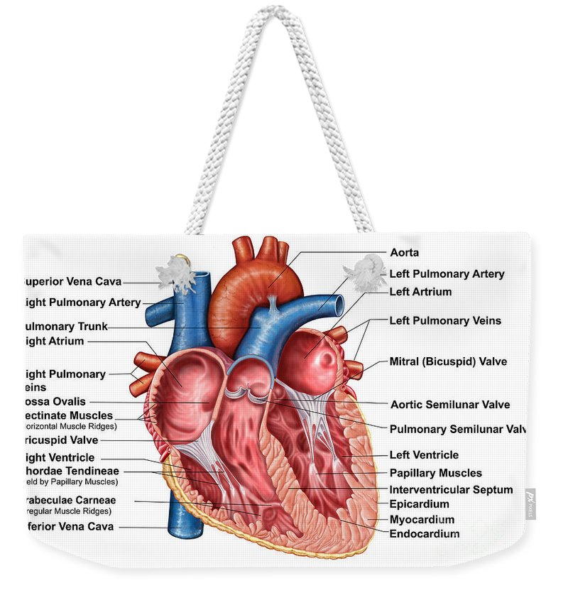 Anatomy Of Heart Interior, Frontal Weekender Tote Bag for Sale by ...