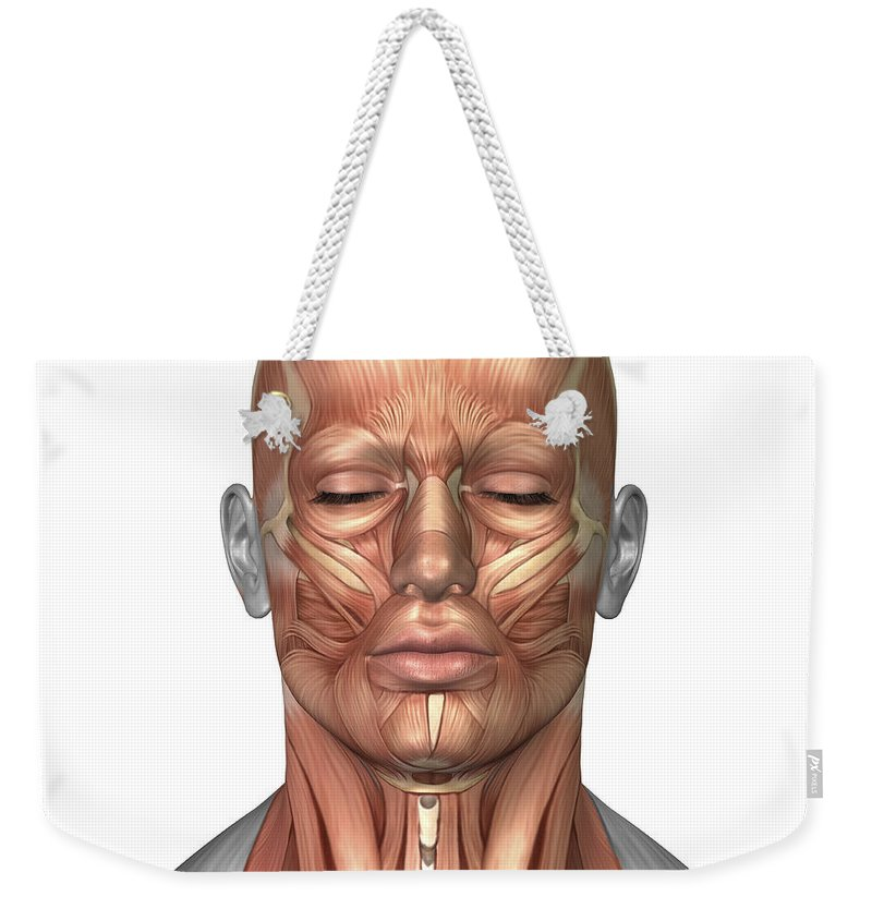 Anatomy Of Human Face And Neck Muscles Weekender Tote Bag For Sale