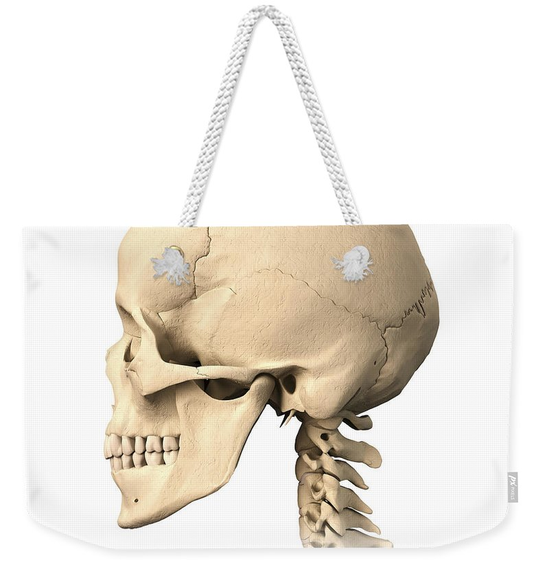 Anatomy Weekender Tote Bag featuring the photograph Anatomy Of Human Skull, Side View by Leonello Calvetti