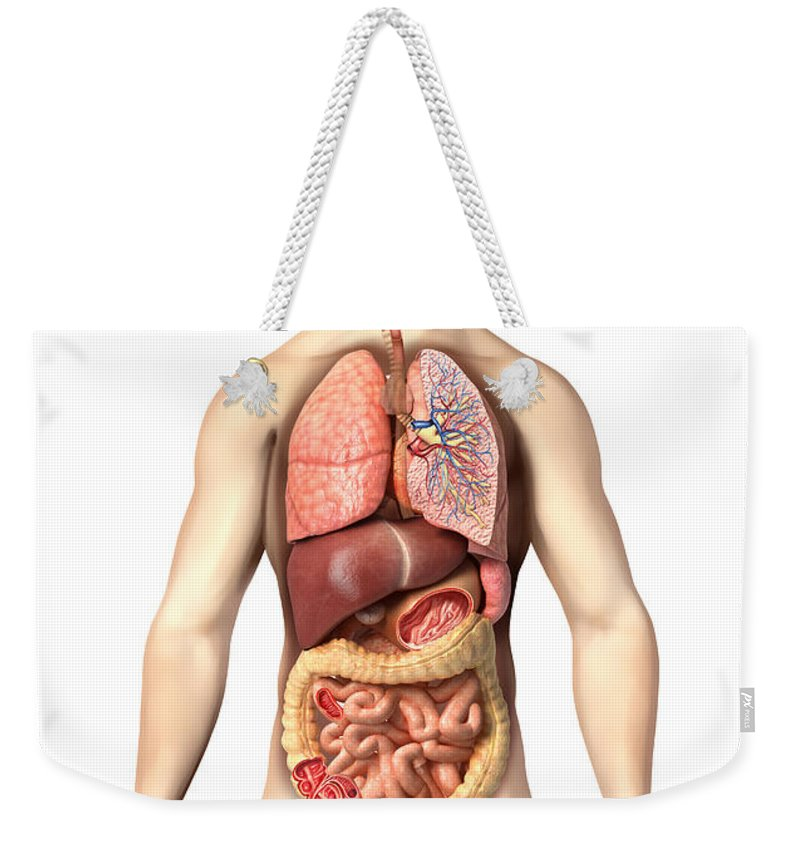 Three Dimensional Weekender Tote Bag featuring the digital art Anatomy Of Male Respiratory by Leonello Calvetti