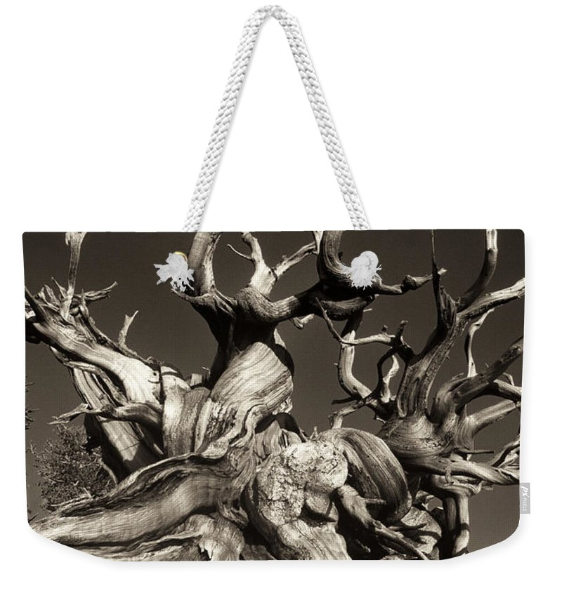 American Weekender Tote Bag featuring the photograph Ancient Bristlecone Pine In Black And White by Dave Welling