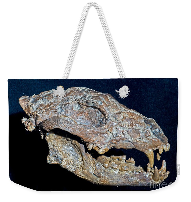 Nature Weekender Tote Bag featuring the photograph Ancient Coyote by Millard H. Sharp