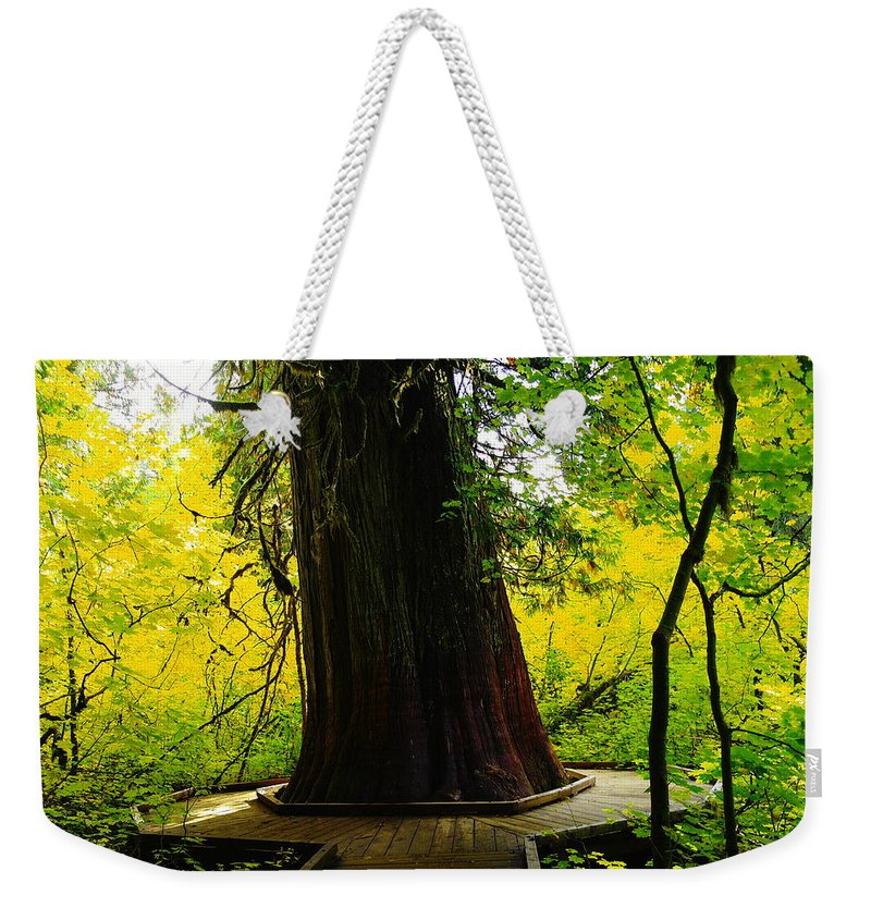 Wood Weekender Tote Bag featuring the photograph Ancient Old Growth by Jeff Swan